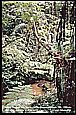 MALAYSIA_Cameron Highlands_walking in tropical area_like in a jungle_my motorcycle-world-trip 1995/96_Jochen A. Hübener